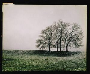 Chastre, rue de Corsal. Mes arbres préférés.