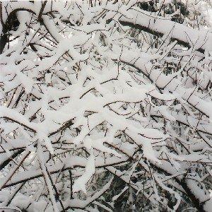 Rien que des traits noirs sous le blanc de la neige.