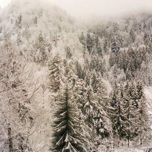 A la Bresse les couleurs de l'hiver font un paysage en noir et blanc.