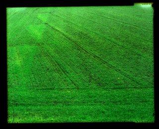 Blé en herbe, du côté de Villers La Ville
