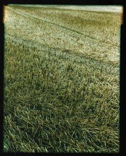 Chaumes dans la campagne de Villeroux / Chastre / Brabant Wallon