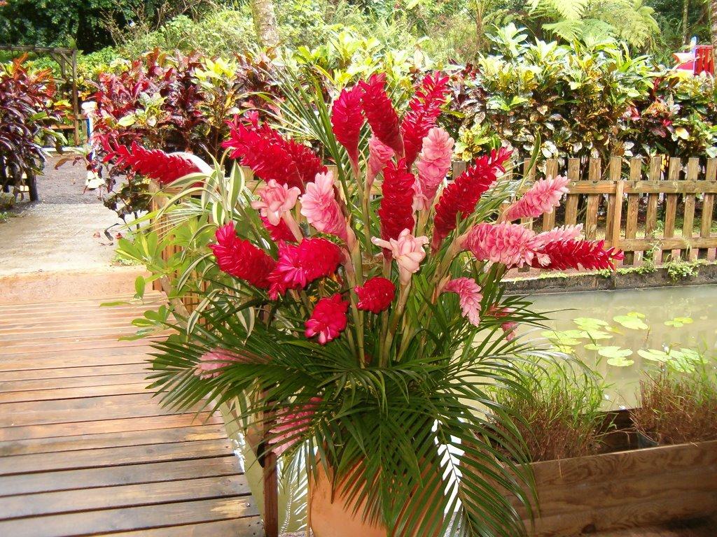 Du four au jardin et mes dix doigts fleurs des antilles for Jardin aux fleurs