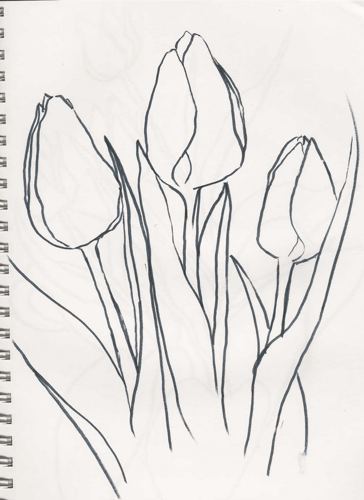 Line Drawing Tulip : Botanical tulip drawings drawing two tulips by