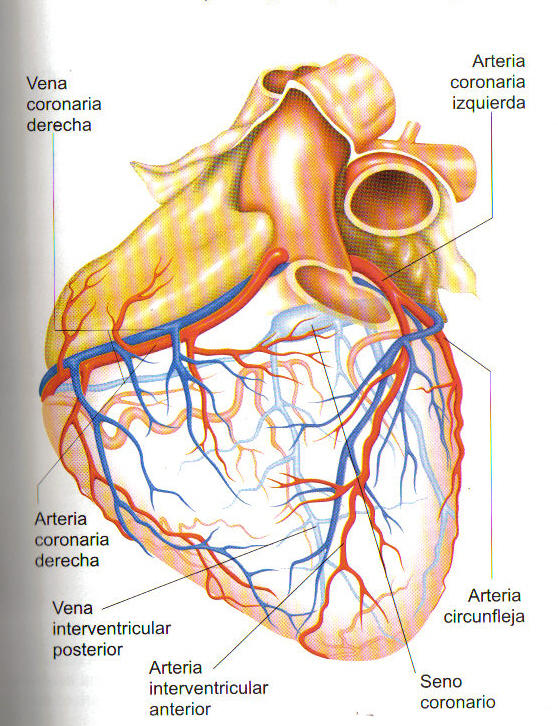 Dr. Abdón Guerra F. (abdonguerra@yahoo.com) Blog de información ...
