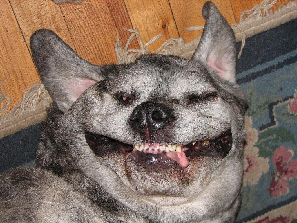 Ugly looking dogs - photo#15