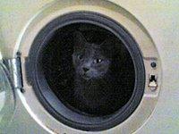 peseta nella lavatrice: il fresco della centrifuga