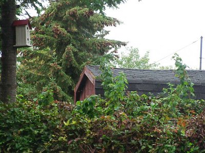 Birdhouse, Southmead Park, Oshawa