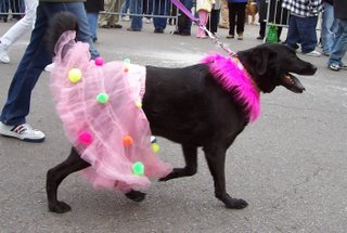 Black dog in pink tutu