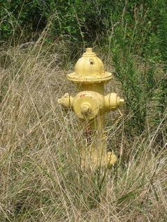 Yellow firehydrant surrounded by dead grass