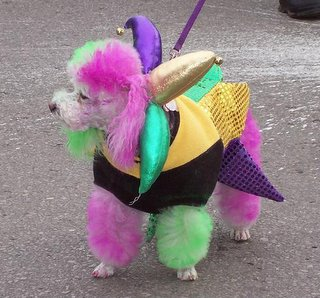 Little poodle dog dyed in pastel colors with jester's collar