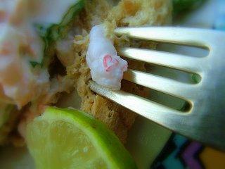 the heart life of a shrimp