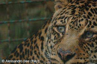 Sad Leopard | JAYNE'-S WORLD
