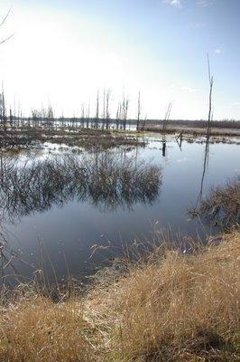 Maple River Marsh