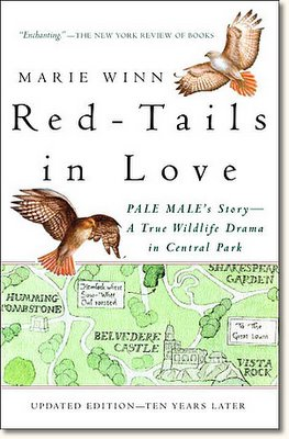 Red-Tails in Love : PALE MALE'S STORY--A True Wildlife Drama in Central Park by Marie Winn