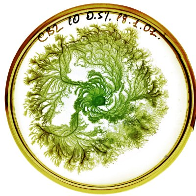 Petri dish garden #2
