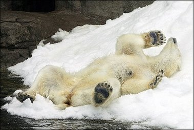 Plush Life: Polar Bear Porn™