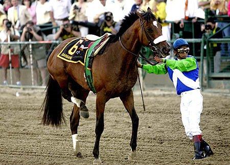 Hasty Ruminations A Horse S Broken Leg