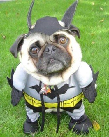 BatmanDog