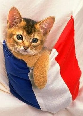 France Cat picture