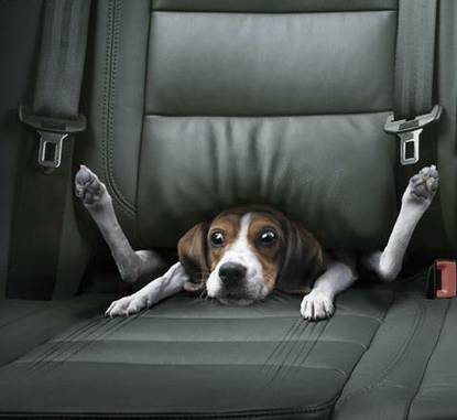 Funny Dog seat