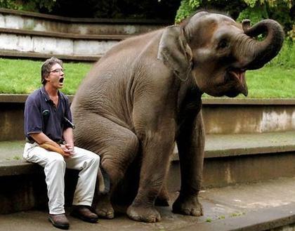 elephant smile