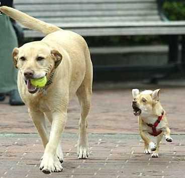 Ball Back