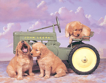 Tractor picture with dogs