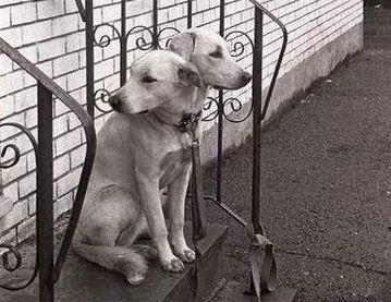 2 Head Dog
