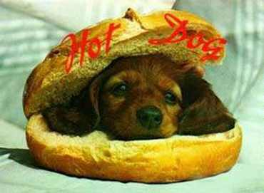 About Hot Dog