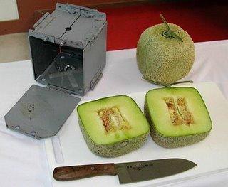 melone quadrato giapponese giappone