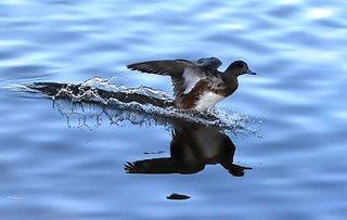 Teal landing