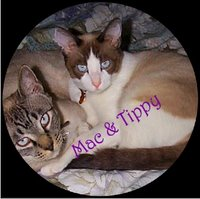 DVD Cover for Mac 'n' Tippy