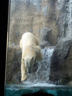 Polar Bear at Asahiyama Zoo