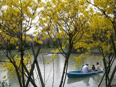 Rowboats on Nakajima Lake in the Spring
