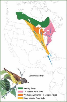 Connecticut Warbler migration.  From the NPWRC.
