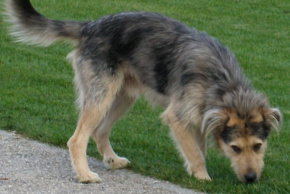 scruffy dog breeds Quotes