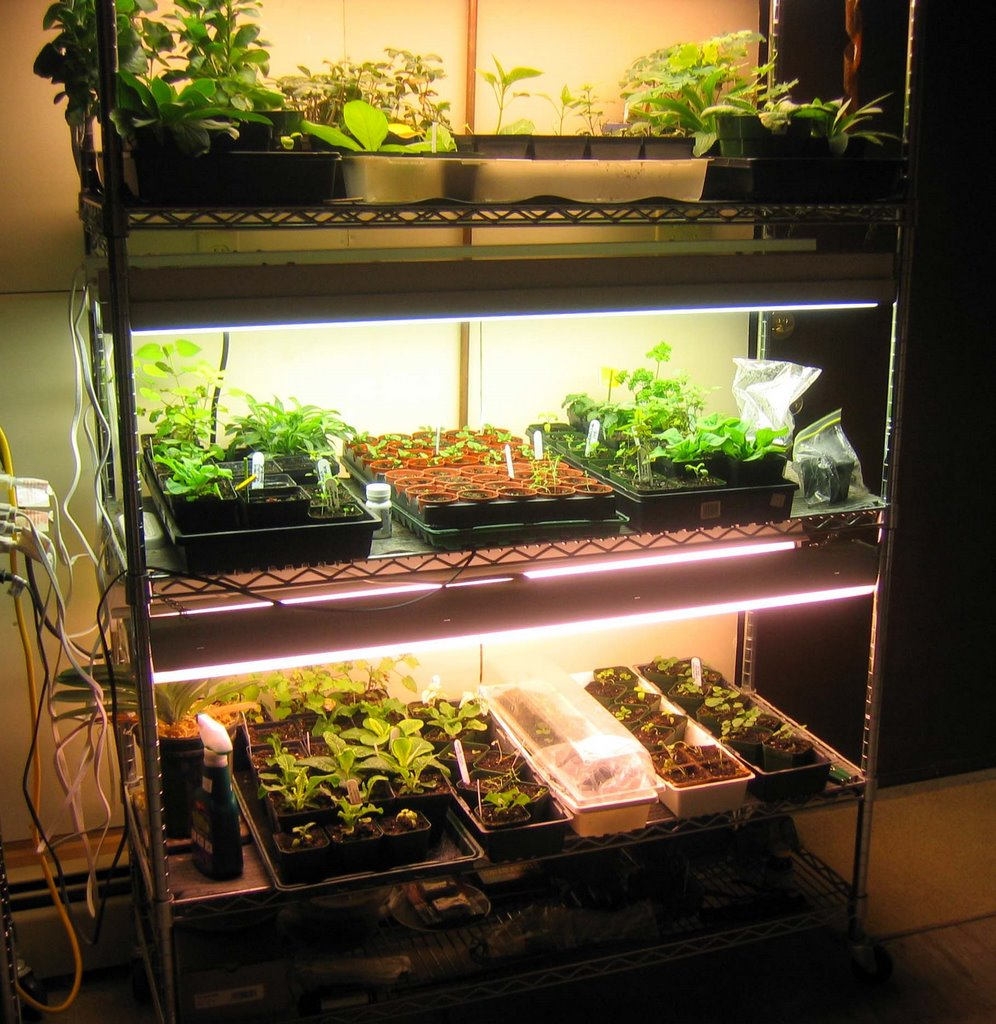 northern exposure gardening basement grow op