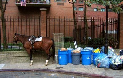 Why would someone throw away a perfectly good horse?