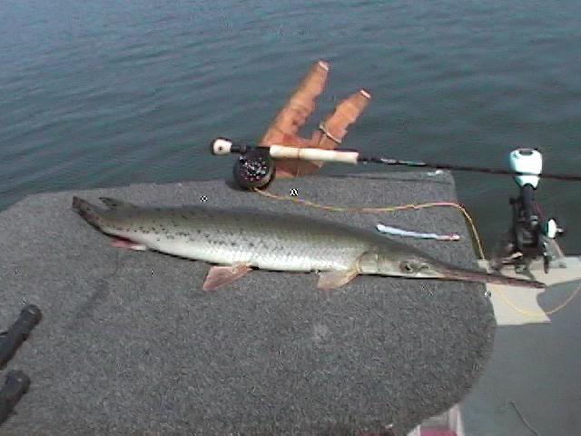 Lake lanier gar fishing may 2006 for Gar fishing lures