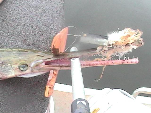 Lake lanier gar fishing july 2006 for Gar fishing lures