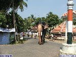 Gajarathnam guruvayur padmanabhan - the elephant