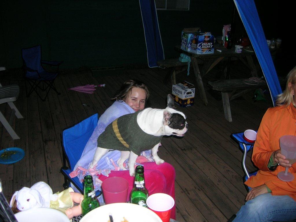 Dog Vomiting Small Brown Hard Lumps Uk