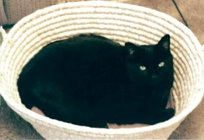 Lightfoot in a Basket