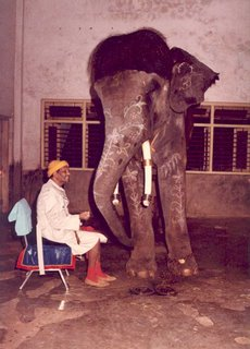 This is Swami Muktananda with the ashram elephant Vijay, also known as Swami Vijayananda, supposedly a reincarnation of a fallen yogi who had too much pride. Vijay attacked his mahut, or caretaker, and was sent to a zoo, where he attacked and killed another mahut, and was destroyed.