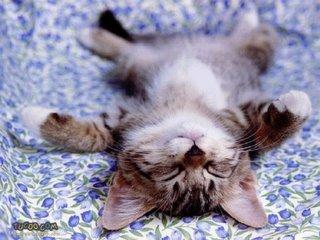 Gatinho Dorminhoco