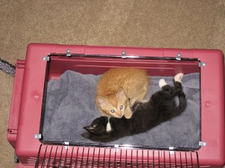 Jinx and Saffron in the carrier
