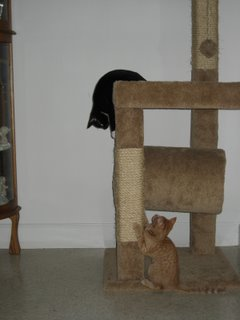 Kitties in the cat tree