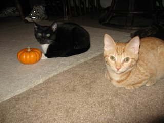 Kitties' First Halloween