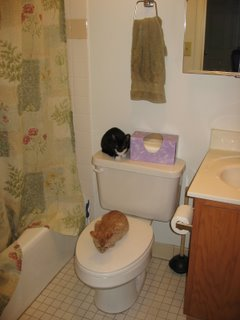Kittens in the bathroom