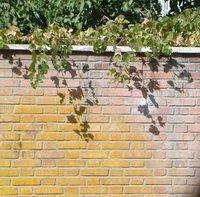 wall-vine2